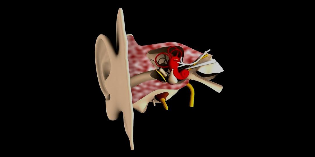Шум - устройство на човешкото ухо